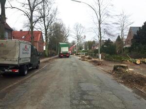 Baumfällung Reinbeker Weg