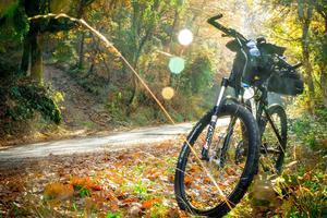 Rad im Wald pexels