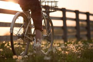 blumen-draussen-fahrrad-fahrradfahren-1548771
